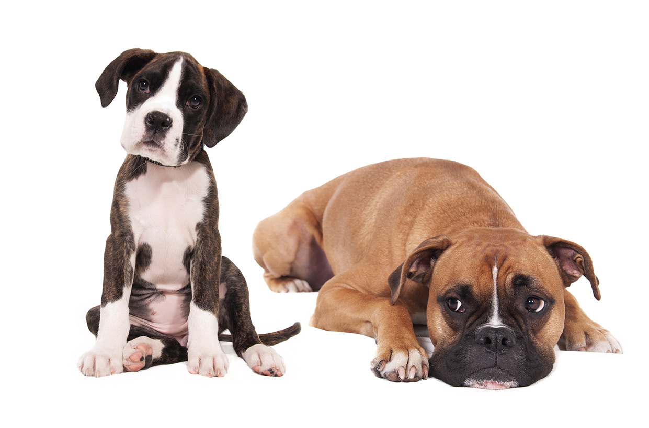 Michelstadt Tierarztpraxis